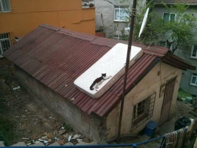 кот на матрасе на крыше