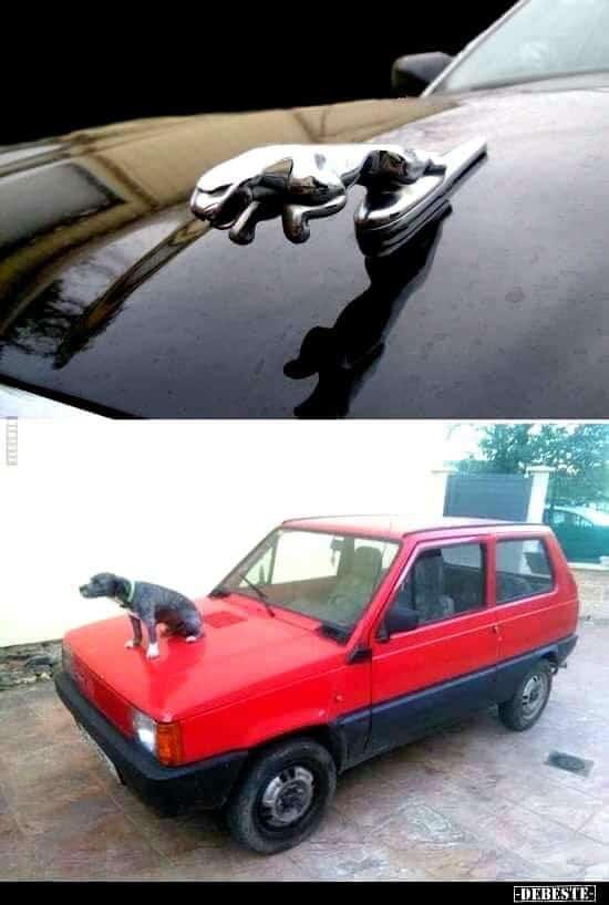собака сидит на капоте красной машины