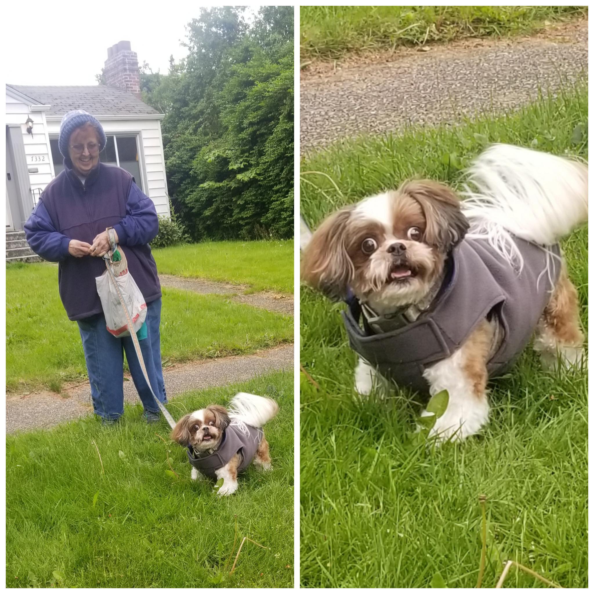женщина с собакой на поводке