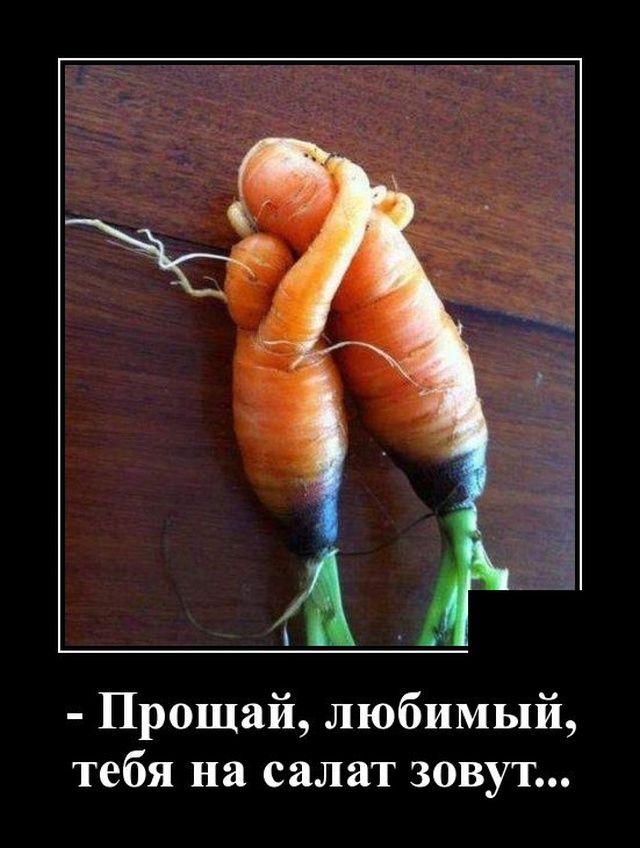 demotivatory-demotivator-smeshnye-demotivatory-demotivator-so-smyslom
