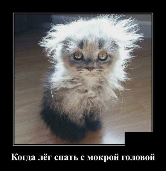 1585151959_1585148131_demotivatory_01.jpg