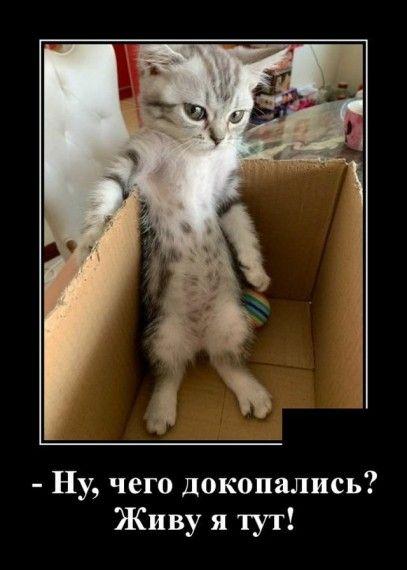 1585152472_1585148125_demotivatory_14.jpg