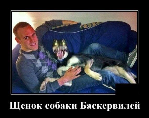 1585152147_1585148189_demotivatory_08.jpg