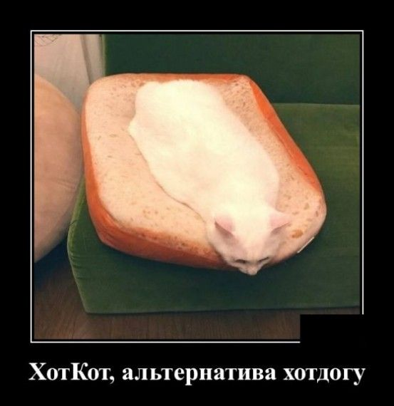 1585152074_1585148148_demotivatory_07.jpg