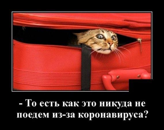 1585152099_1585148094_demotivatory_12.jpg