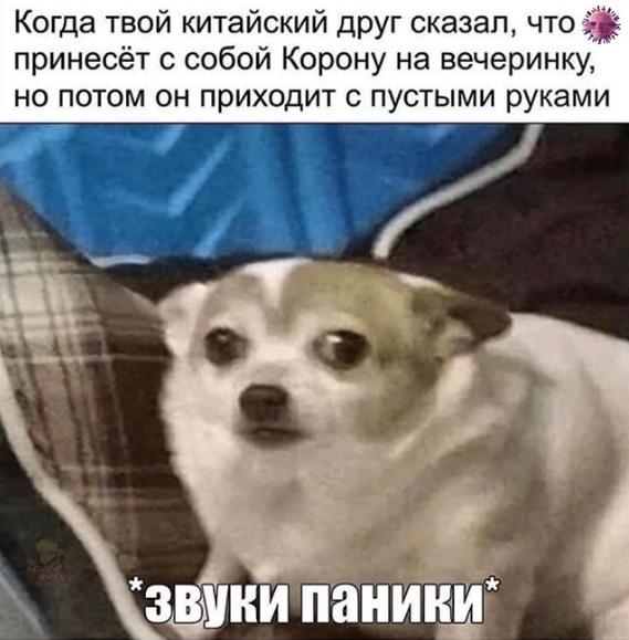 фото собаки мем
