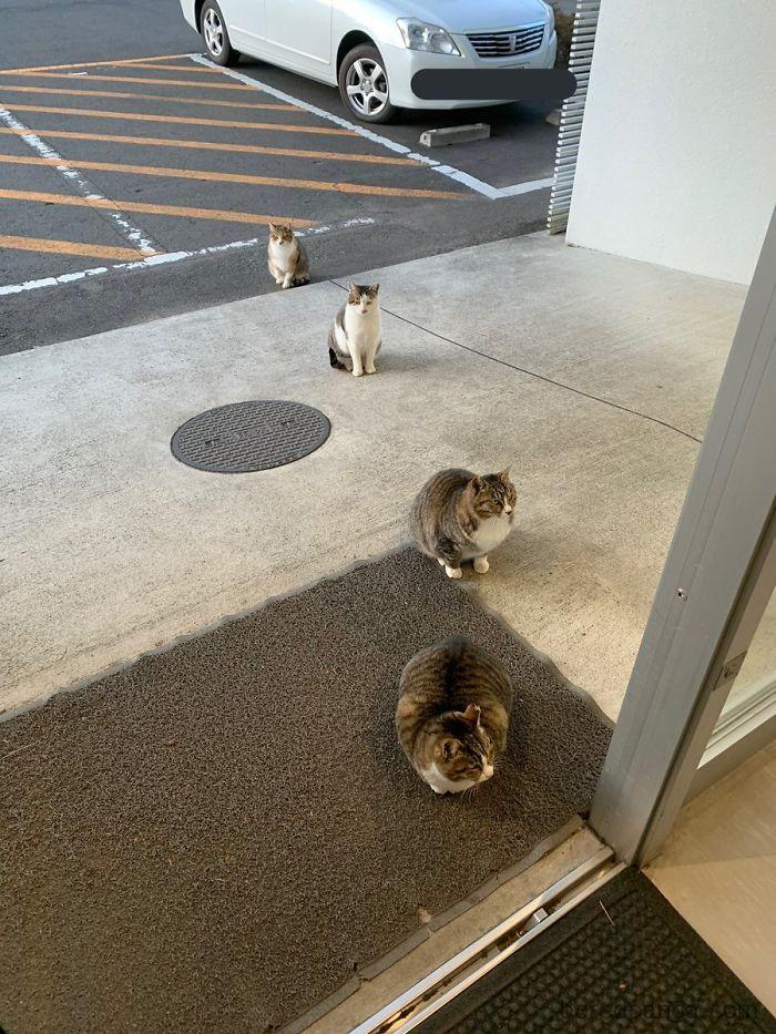 коты сидят перед магазином