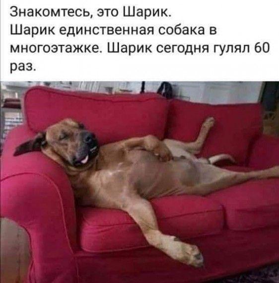 1585762001_152355616_fb_img_1585668150472.jpg