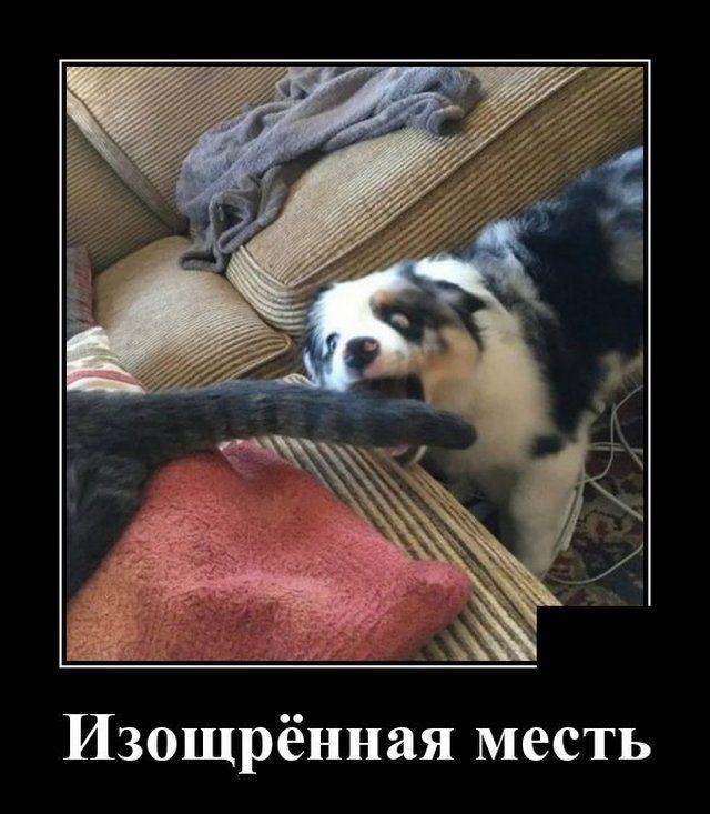 1585855762_0012.jpg