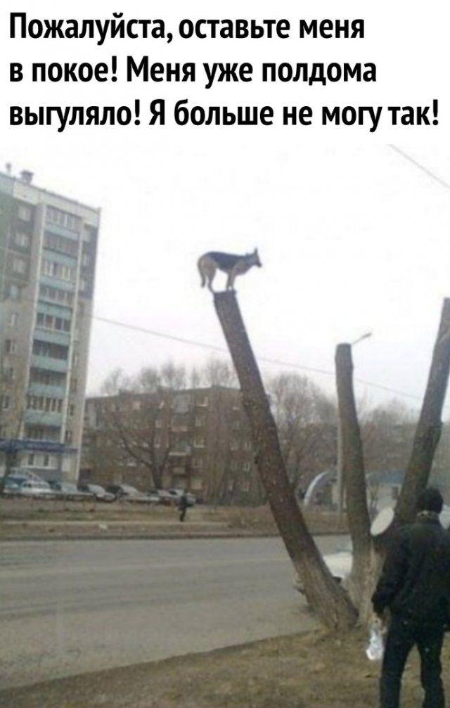 1586073288_prikol-11.jpg