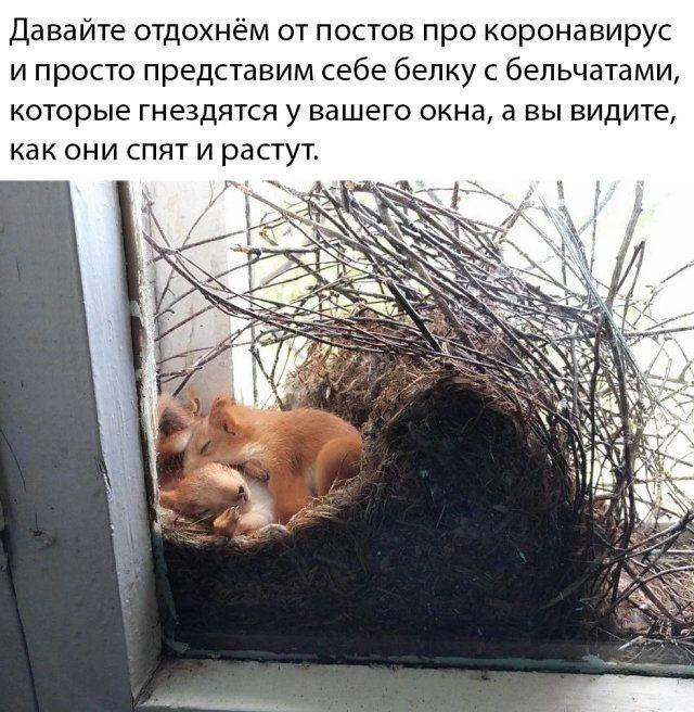 1586073306_prikol-38.jpg