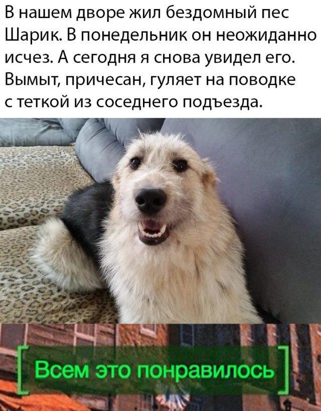 1586073266_prikol-23.jpg