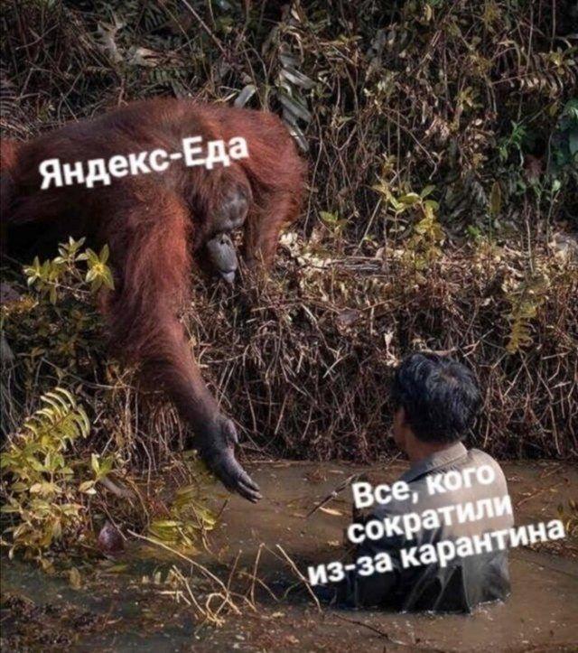 191521_16_trinixy_ru.jpg