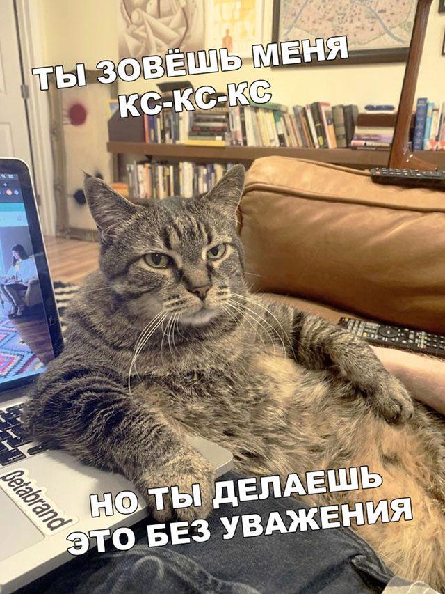1586211800_podborka-22.jpg