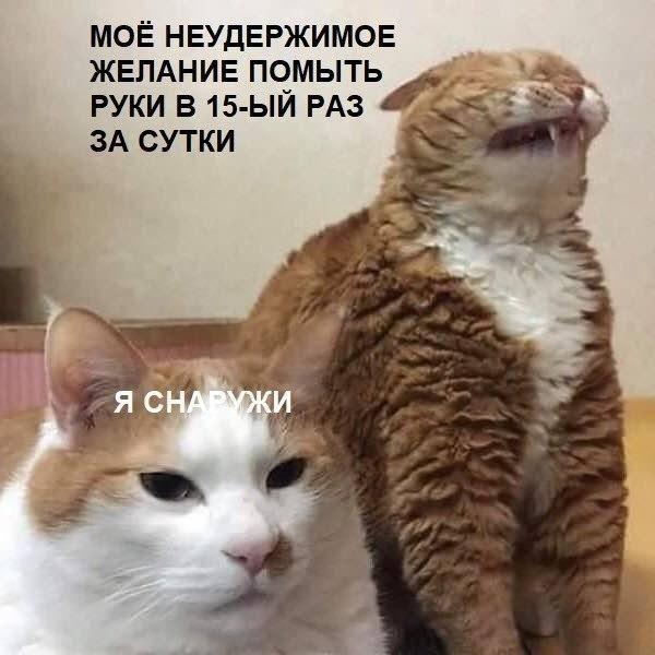 1586915115_kartinka-11.jpg