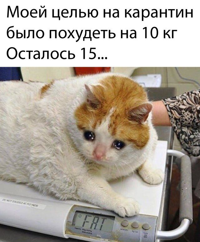 1586915064_kartinka-23.jpg