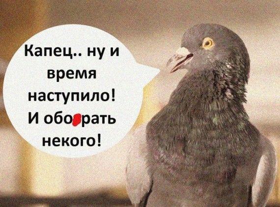 1586875144_152470767_czwrv4wylhk.jpg