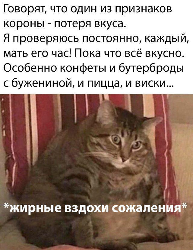 Надписи и прикольные картинки Приколы,myprikol,com