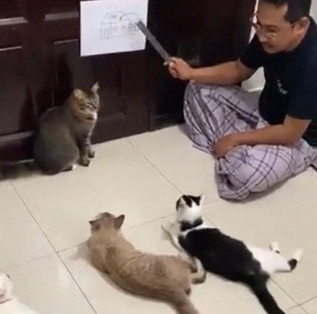 мужчина сидит на полу с котами