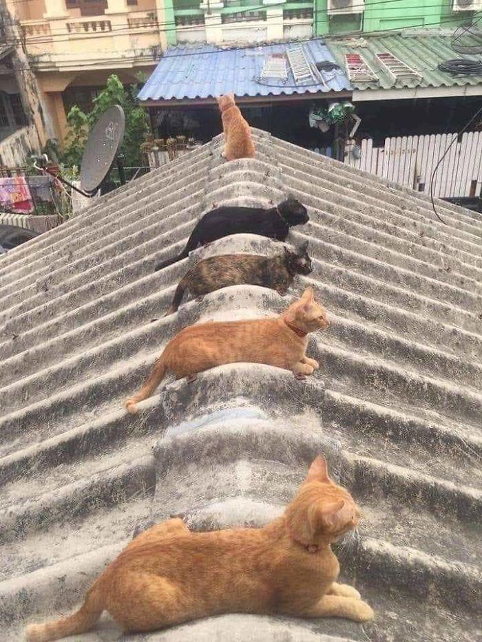 коты сидят на крыше