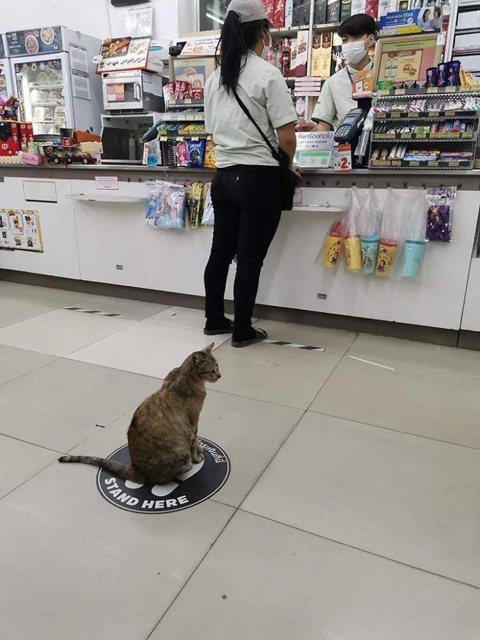 кот сидит в магазине
