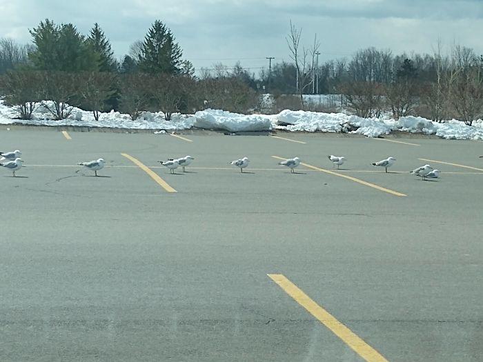 чайки на парковке