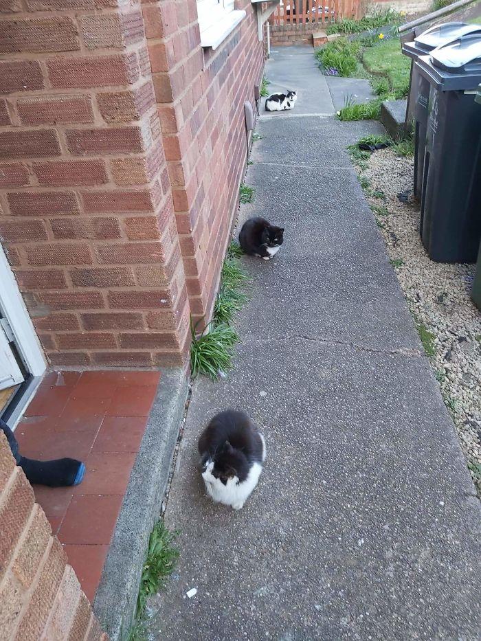 черно-белые коты сидят под домом