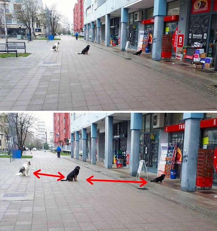 собаки сидят в очереди перед магазином