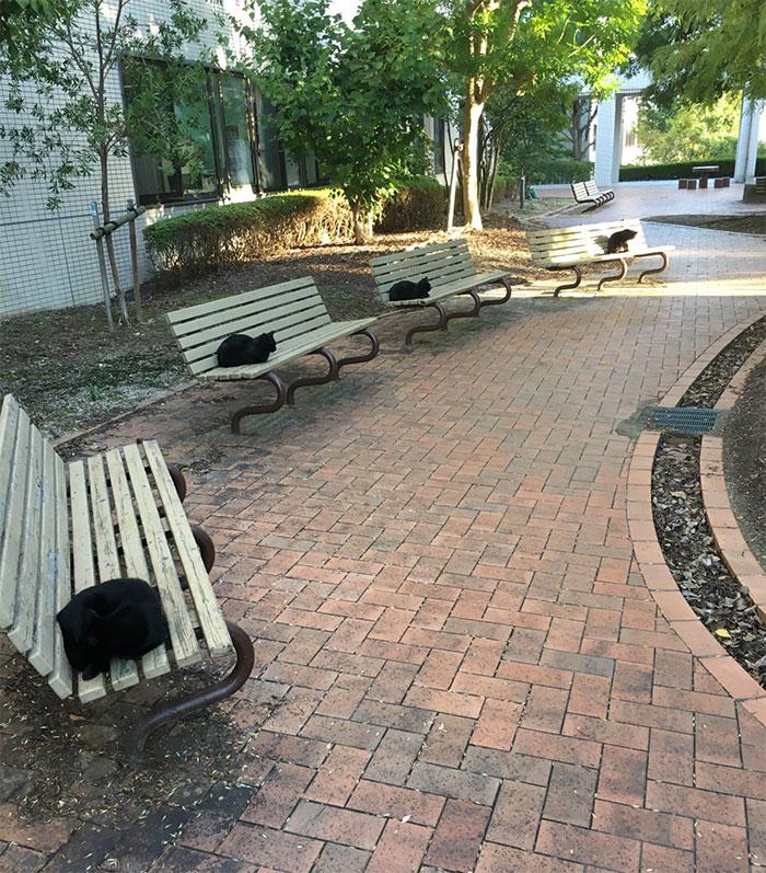 черные коты сидят на лавках в парке