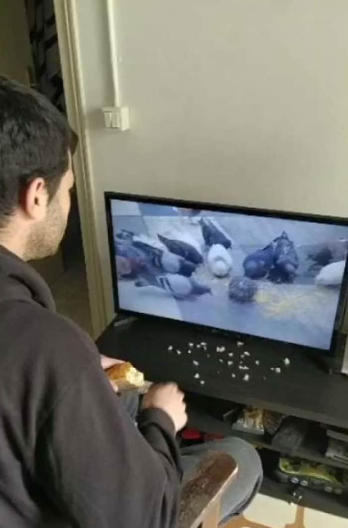 мужчина кормит голубей онлайн