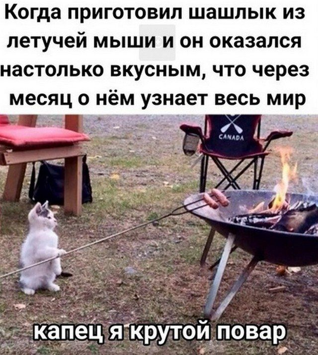 shutyat-seti-prazdniki-citaty-vkontakte-vkontakte-smeshnye-statusy