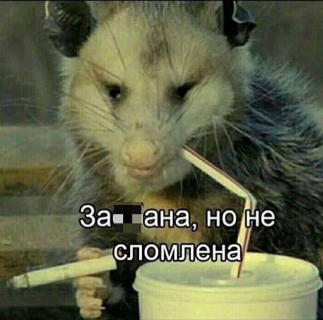 shutki-seti-samoizolyaciya-citaty-vkontakte-vkontakte-smeshnye-statusy