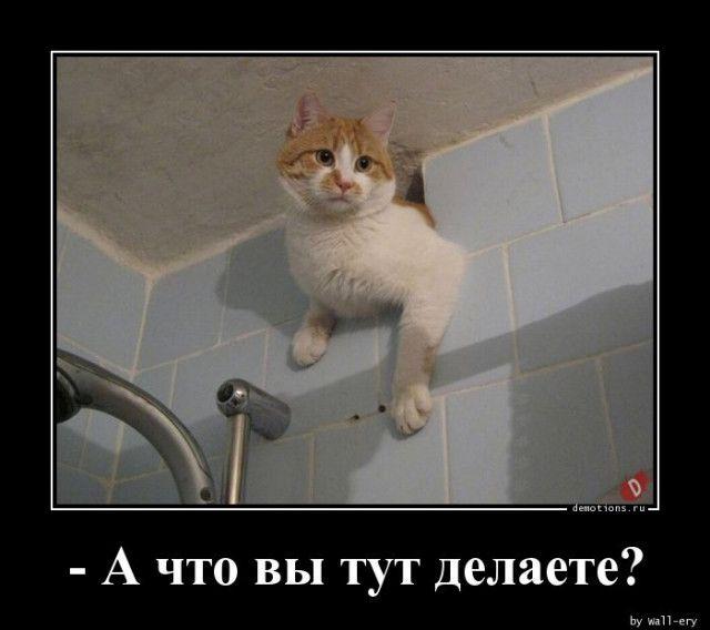 1588835193_demki-5.jpg
