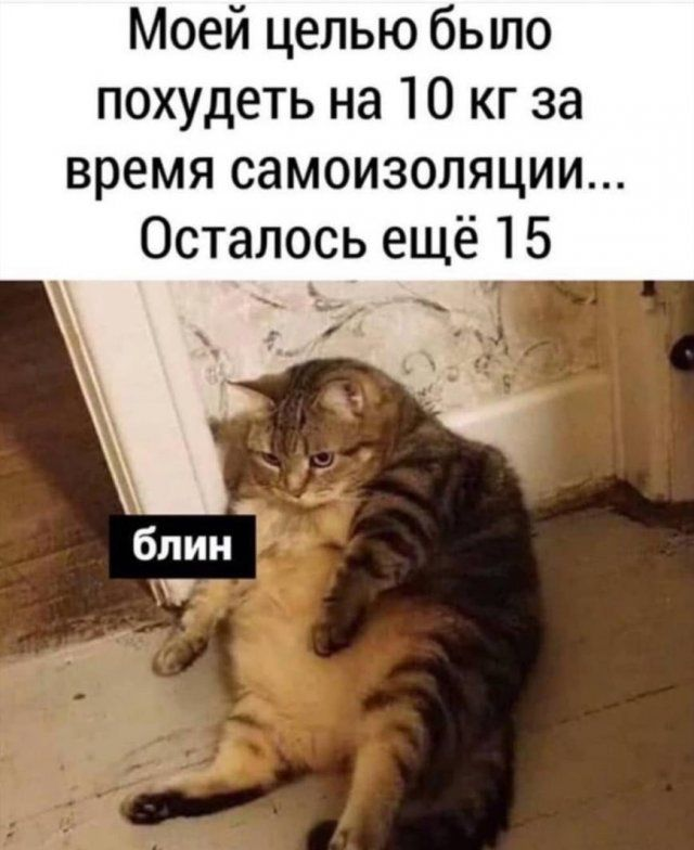 193552_14_trinixy_ru.jpg