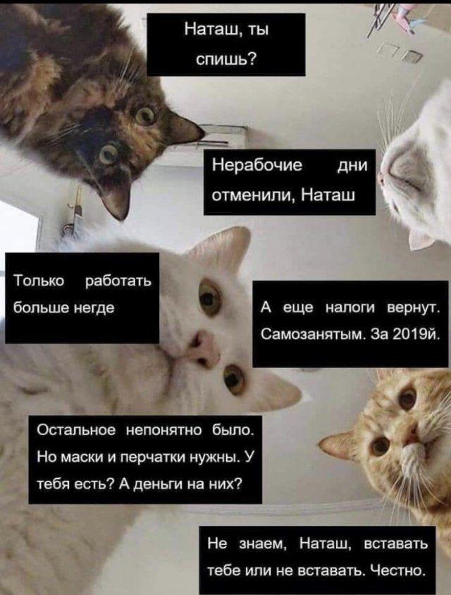 Мемы про нерабочие дни, удаленку и карантин  Приколы,ekabu,ru,мемы