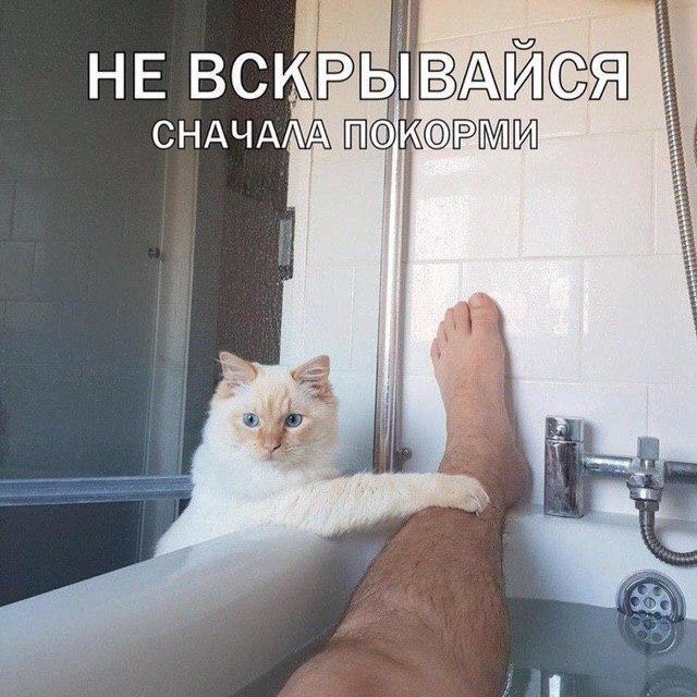 1590011034_prikol-19.jpg