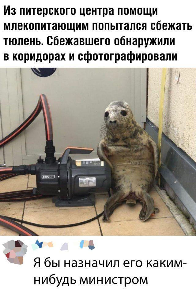1590011025_prikol-21.jpg