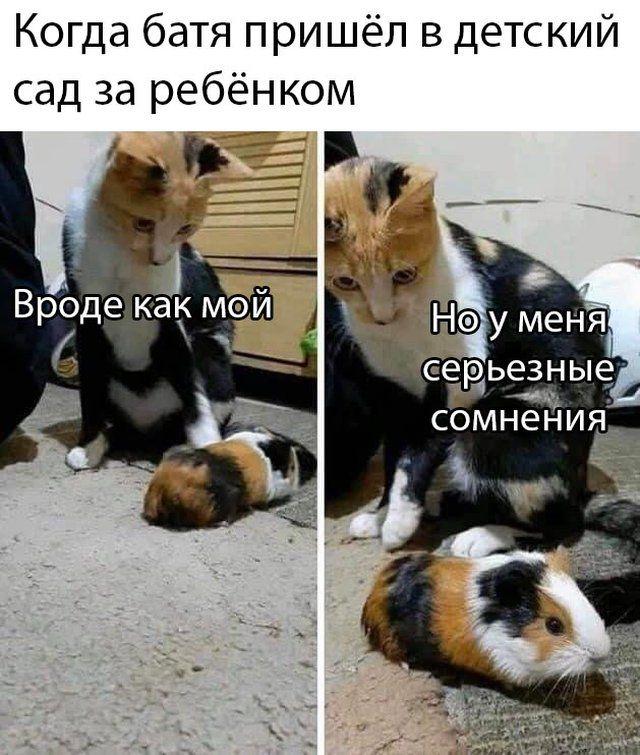 1590011044_prikol-7.jpg