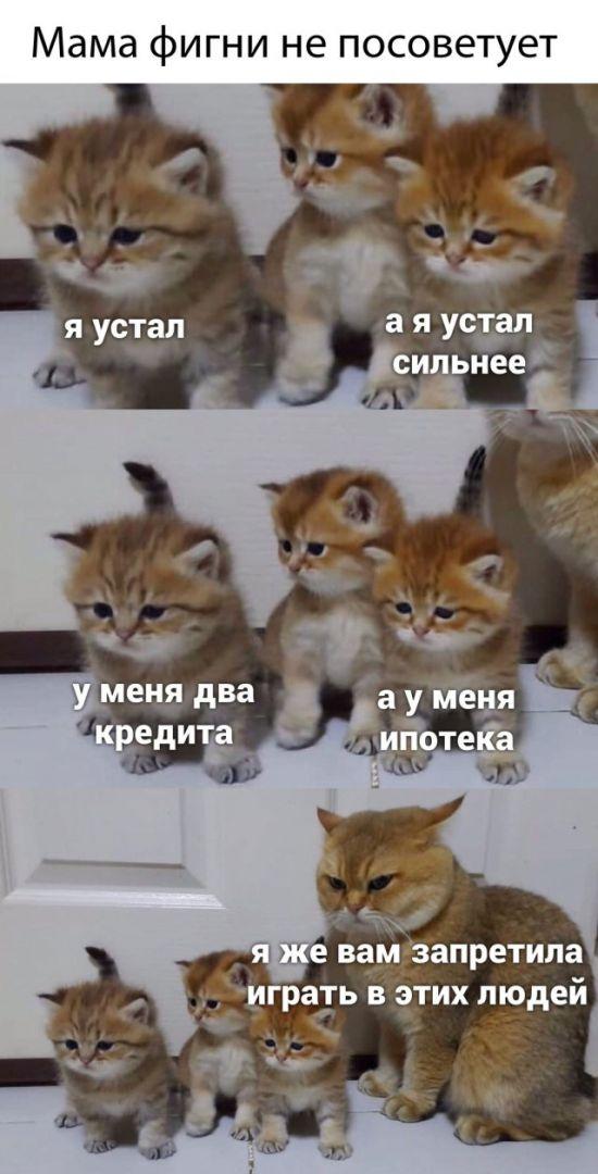 1590011096_prikol-8.jpg
