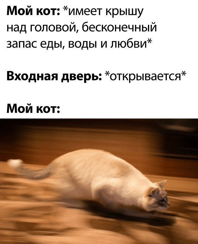 1590272713_prikol-18.jpg