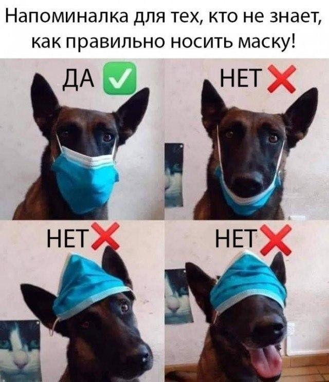 1590272735_prikol-1.jpg