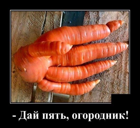 1590607090_1590583476_demotivatory_13.jpg
