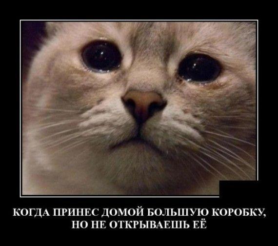 1590607134_1590583477_demotivatory_16.jpg