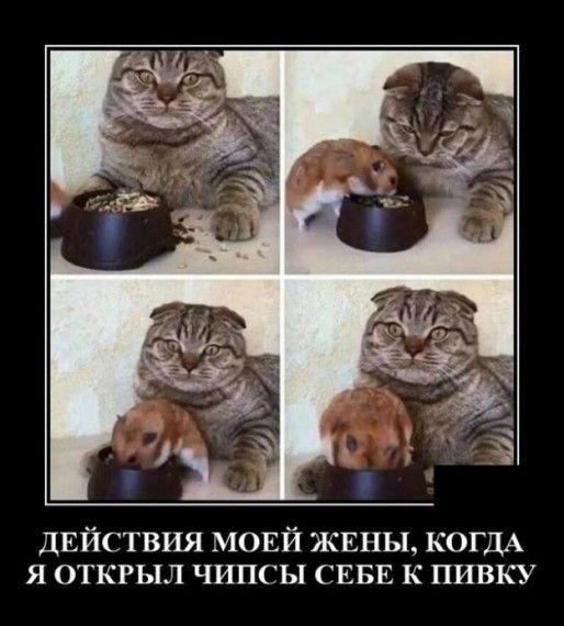 1590607303_330757_1153205.jpg