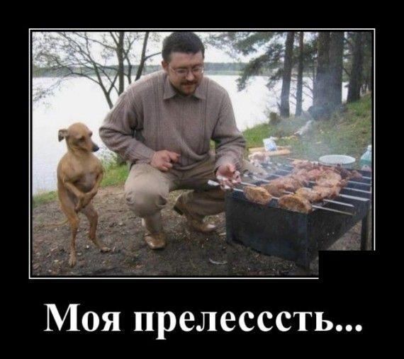 1590607141_1590583499_demotivatory_08.jpg