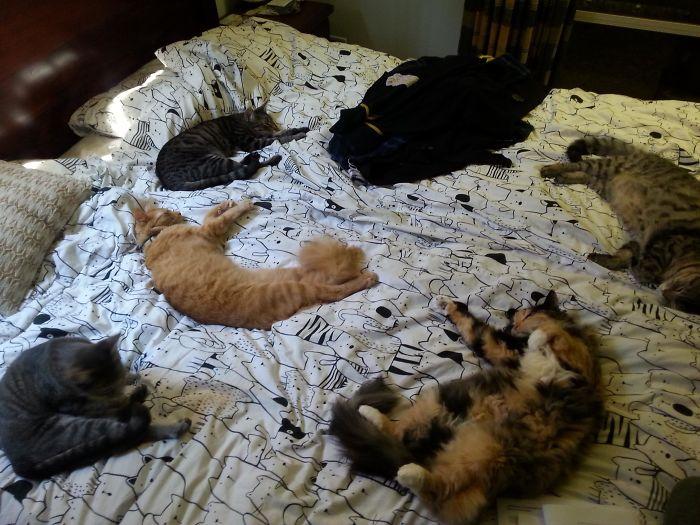 коты спят на кровати