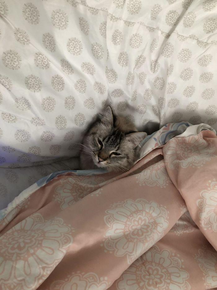 кошка спит под одеялом