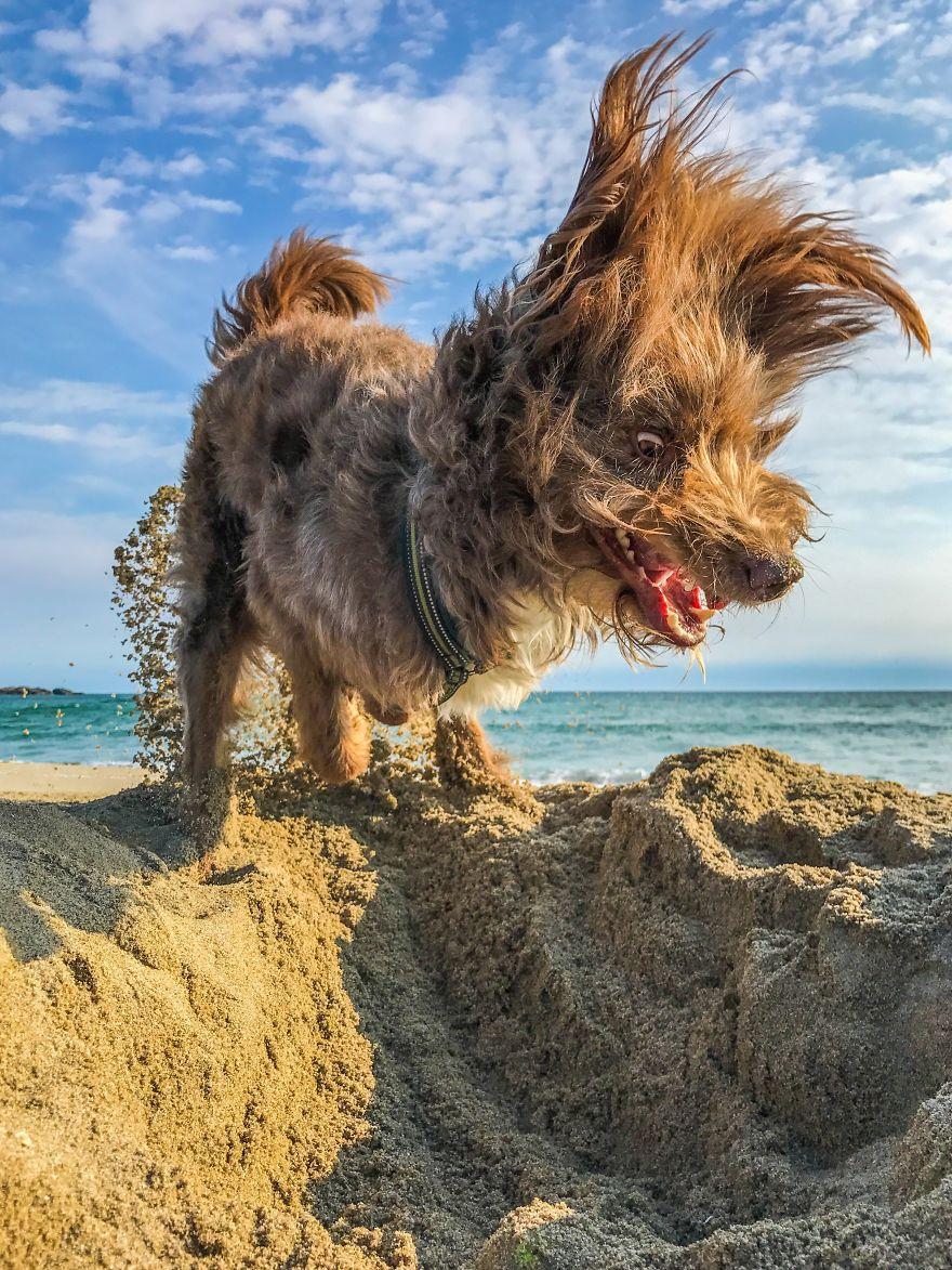 собака роет песок на пляже