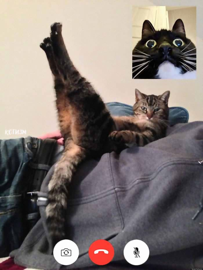 кошка лежит, вытянув лапы вверх