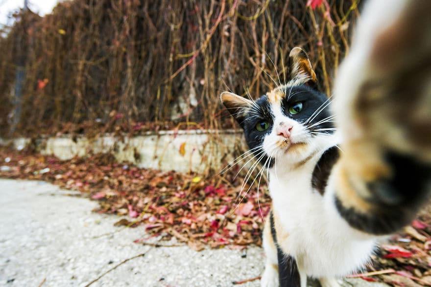 пятнистая кошка тянется лапой к камере